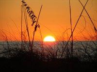 Sunset Tropical contact high.jpg